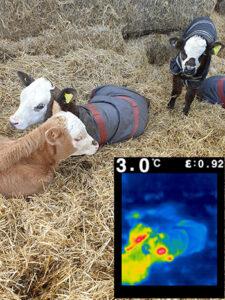 Calf 2 - 3.0 degrees celcius
